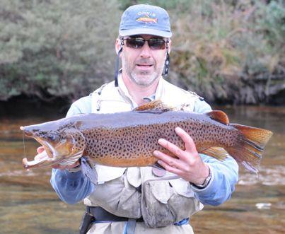 """Résultat de recherche d'images pour """"trout river Thredbo"""""""